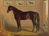 America's Renowned Stallions, c. 1876 IV Poster by  Vintage Reproduction