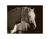 Andalusian Stallion Art by Barry Hart