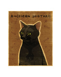 American Shorthair Posters by John W. Golden