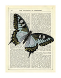 Angled Butterfly Print by Marion Mcconaghie