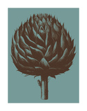 Artichoke 5 Prints by  Botanical Series