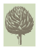 Artichoke 11 Prints by  Botanical Series