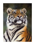 Amur Tiger Looking Up Print by Rachel Stribbling