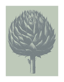 Artichoke 8 Posters by  Botanical Series