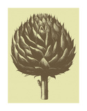 Artichoke 3 Prints by  Botanical Series