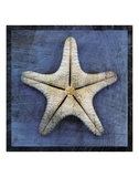 Armored Starfish Underside Poster by John W. Golden