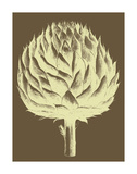 Artichoke 4 Poster by  Botanical Series