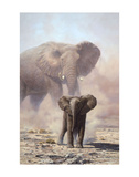 Amboseli Child African Elephant Prints by John Seerey-Lester