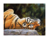 Amur Tiger Back Prints by David Stribbling