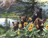 Basking in the Balsams Prints by Kevin Daniel