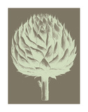 Artichoke 12 Poster by  Botanical Series