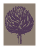 Artichoke 14 Prints by  Botanical Series