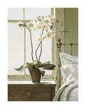 Orchidées sur table de chevet Affiches par Zhen-Huan Lu