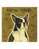 Boston Terrier (square) Posters by John W. Golden