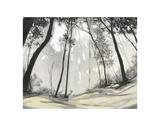 Black Forest Prints by Steven Garrett