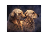 Blond Goldens Prints by Greg Alexander