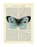 Blue Butterfly Posters by Marion Mcconaghie