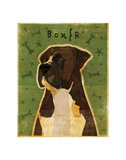 Boxer (Brindle) Prints by John W. Golden