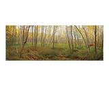 Birch Forest Panorama Art by Michael Hudson