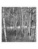 Birch Forest Poster af Erin Clark
