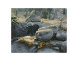 Boulder Bruin Art by Stephen Lyman
