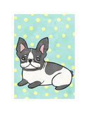 Boston Terrier Poster by  My Zoetrope