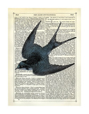 Blue Bird Posters by Marion Mcconaghie