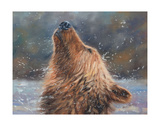 Brown Grizzly Bear Prints by David Stribbling