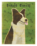 Border Collie Art by John W. Golden