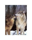 Nördliches Zwischenspiel, Kanada Kunstdrucke von Art Wolfe