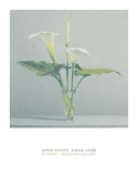 Calla Lilies Posters by James Moore