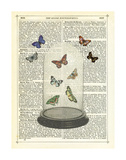 Butterfly Dome Prints by Marion Mcconaghie