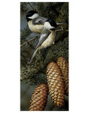 Chickadees Print by Carl Brenders