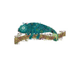 Chameleon Kunstdrucke von Teofilo Olivieri