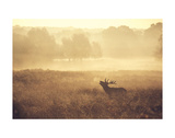 Call Posters by Mark Bridger