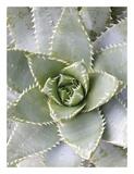 Cactus 3 Poster by Jenny Kraft