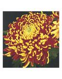 Chrysanthemum 1 Print by Elizabeth Hellman