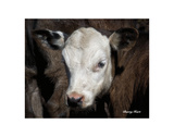 Calf 4 Poster by Barry Hart