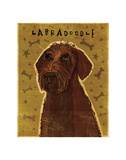 Chocolate Labradoodle Print by John W. Golden