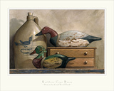 Canvasback and Wood Duck Prints by Kathleen Cope Ruoss