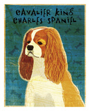Cavalier King Charles (Blenheim) Prints by John W. Golden