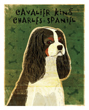 Cavalier King Charles (tri-color) Prints by John W. Golden