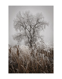 Cattails Teasel and Tree Prints by David Lorenz Winston