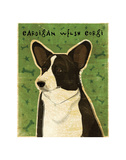 Cardigan Welsh Corgi Posters by John W. Golden