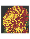Chrysanthemum 2 Prints by Elizabeth Hellman
