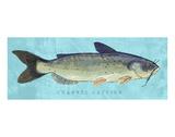 Channel Catfish Posters par John Golden