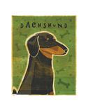 Dachshund (black and tan) Prints by John W. Golden