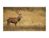 Deerscape Posters by Mark Bridger