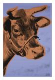 Cow, 1971 (purple & orange) Kunstdrucke von Andy Warhol