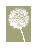 Dandelion (khaki) Prints by Jenny Kraft
